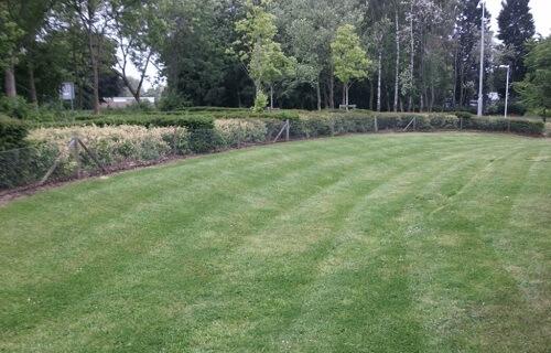 lawn1-1024x657